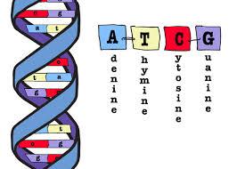 DNA best